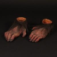 Primate feet