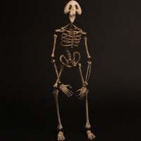 Skeleton stand in puppet