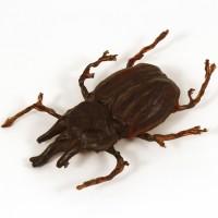 Pankot Palace banquet beetle