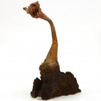 Triffid plant miniature