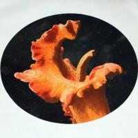 Triffid drum skin
