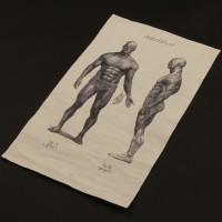 David (Michael Fassbender) anatomical drawing