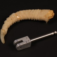 Goat puppet horn and armature section