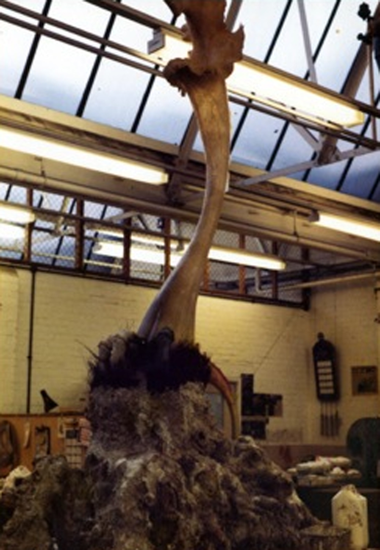 One of the Triffid props under construction at BBC Visual Effects (Image courtesy Steve Drewett)